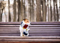 Dog wearing cozy warm scarf sitting on bench at park Royalty Free Stock Photo