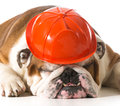 Dog wearing fireman hat Royalty Free Stock Photo