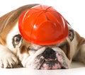 Dog wearing fireman hat Royalty Free Stock Photo