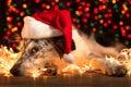 Dog wearing santa hat Royalty Free Stock Photo