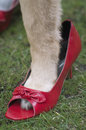 Dog wearing shoes close up of a paw red lady concept of relationship between human and animals outdoor shot with particular focus Royalty Free Stock Photos