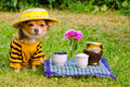 Dog wearing suit, hat relaxing in meadow Stock Images
