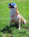 Dog wearing sunglasses Stock Image