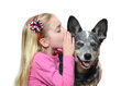 Dog whisper little girl whispering to her white background Stock Photography