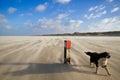 Dog on windy beach Royalty Free Stock Photo