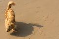 Dog on windy beach.