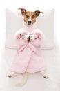 Dog yoga pose Royalty Free Stock Photo