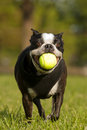 Doggie Playtime Royalty Free Stock Photo