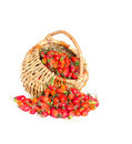 Dogrose in a basket Stock Image