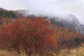 Dogrose bush in mountains crimean at fall Stock Photo