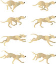 Dogrun cycle white dog run animation character Royalty Free Stock Photo