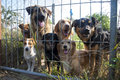 Dogs behind fence in shelter innocent look from standing fences Stock Photo