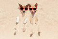 Dogs buried in sand couple of two the at the beach on summer vacation holidays having fun and enjoying wearing red sunglasses Stock Image