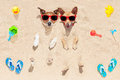 Dogs buried in sand couple of two the at the beach on summer vacation holidays having fun and enjoying wearing red sunglasses Stock Photography