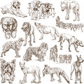 Dogs canidae around the world set no white collection of an hand drawn illustrations description full sized hand drawn Royalty Free Stock Photo