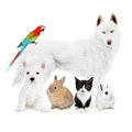 Dogs cat bird rabbits in front of a white Stock Images