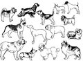 Dogs drawing isolated on a white background Royalty Free Stock Photography
