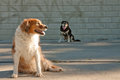 Dogs by a graffiti tagged urban concrete wall in front of brick Stock Photo