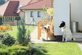 Dogs guarding house standing by and it Royalty Free Stock Image