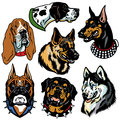 Dogs hedss set with heads icons difference breeds isolated on white background Stock Photo