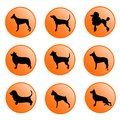 Dogs icon set illustration of dog silhouette collection in buttons isolated with format Royalty Free Stock Images