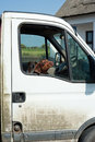 Dogs looking through car window Royalty Free Stock Photo
