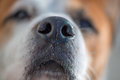 Dogs nose Royalty Free Stock Photo