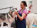 Dogs and owners at exhibition vic spain june xix national dog of catalonia Stock Photo