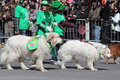 Dogs in the parade Royalty Free Stock Photo
