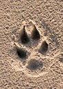 Dogs paw print Stock Photos