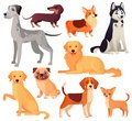 Dogs pets character. Labrador dog, golden retriever and husky. Cartoon vector isolated illustration set