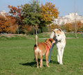 Dogs playing in the park Royalty Free Stock Photos