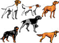 Dogs pointer breeds color illustrations Stock Photos