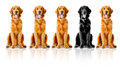 Dogs in a row Stock Photography
