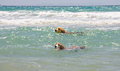 Dogs in the sea swimming hard ocean tarifa spain Stock Photos