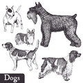 Dogs set of hand drawn pen sketch vector illustration Stock Photos
