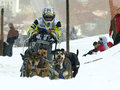 Dogs, sleighs and mushers in Pirena 2012 Royalty Free Stock Photography