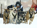 Dogs, sleighs and mushers in Pirena 2012 Stock Photography
