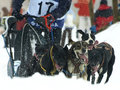 Dogs, sleighs and mushers in Pirena 2012 Royalty Free Stock Photo