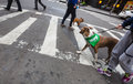 Dogs on the streets of NYC Royalty Free Stock Photo
