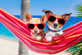 Dogs summer hammock couple of two relaxing on a fancy red with sunglasses in vacation holidays at the beach under the palm tree Stock Photography