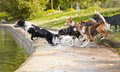 Dogs team border collie jumping water Stock Image