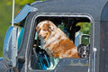 Dogs in truck cab window a pair of australian shepherds sitting the front of a waiting for their owner Royalty Free Stock Images
