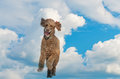Dogs view of heavenly fun running in the sky Royalty Free Stock Photo