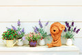 Doll clay and flower in garden Stock Photography
