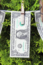 Dollar bills 免版税库存图片