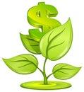 Dollar plant Royalty Free Stock Photo