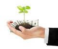 Dollar and plant in hand Royalty Free Stock Photo