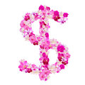 Dollar sign  from orchid flowers isolated on white Royalty Free Stock Photo