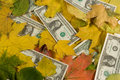 Dollars covered with autumn leaves Royalty Free Stock Images